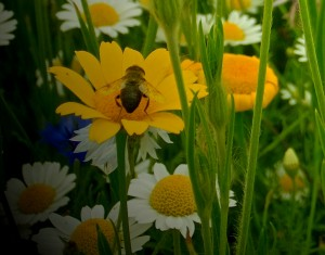 Bees 2 © Linda Lamon 2017