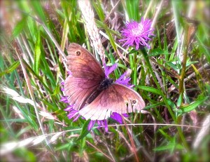 ButterflyMay'sWood© Linda Lamon 2017