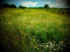 May's Wood (c) Linda Lamon